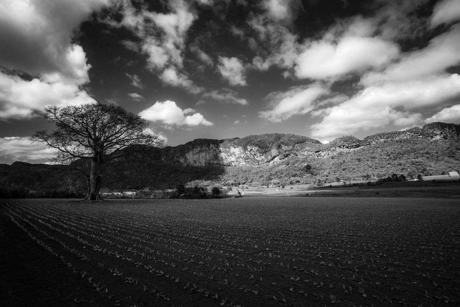 Black and White Photography by Tim van den Boog