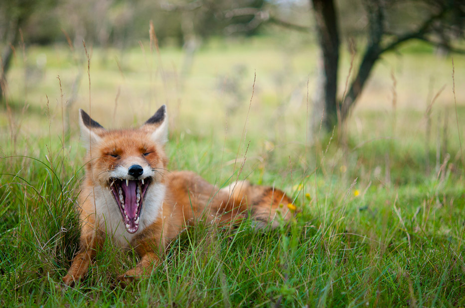 Animal Photography by Tim van den Boog