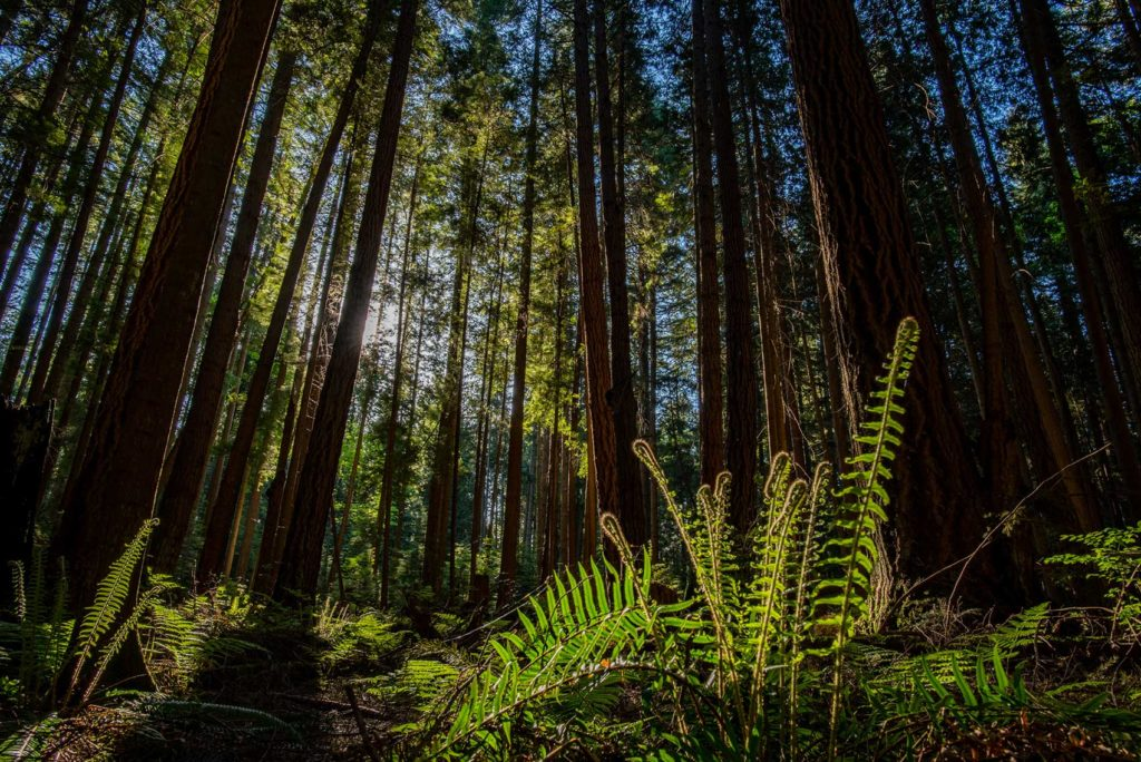 Forest British Columbia Vancouver