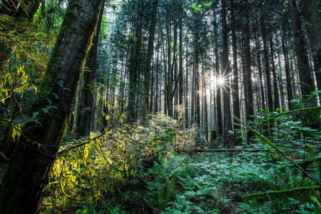 Forest British Columbia Vancouver Spirit Pacific